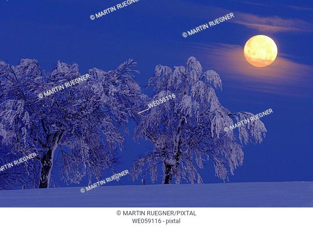 Full moon over snow covered trees. Black forest, Baden-Wuerttemberg (Baden-Wurttemberg), Germany, Europe