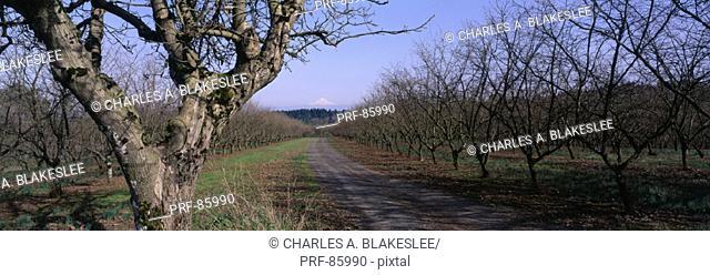 Hazelnut Orchard Washington County OR