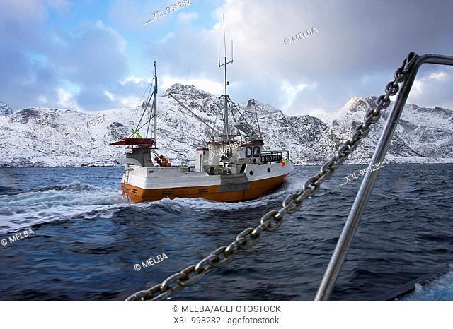 Codfish fishing ship  Lofoten islands  Norway