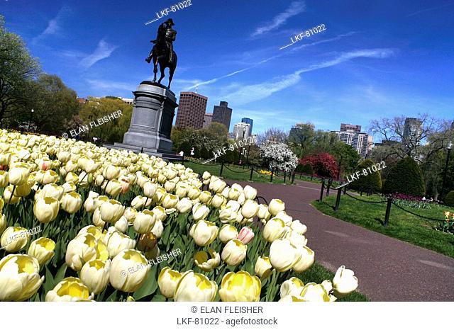 Flowers in The Public Gardens, Boston, Massachusetts, USA