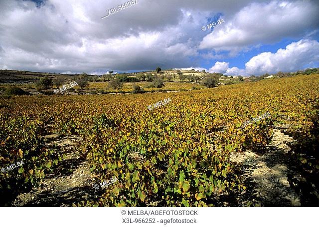 Vineyard of Trodos  Cyprus