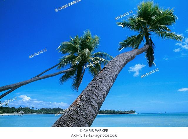 Palm trees on a tropical beach, Fiji