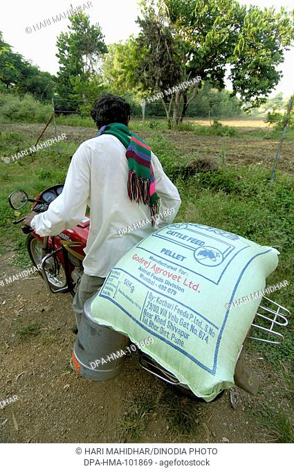Man on bike with cattle feed bought from the Dairy ; Ralegaon Siddhi ; near Pune ; Maharashtra ; India