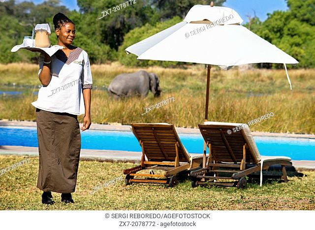 A waitress serves iced tea to tourists arriving on safari in Khwai River Lodge camp Orient Express in Botswana, within the Moremi Game Reserve Wild