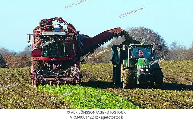 Harvesting of sugar beet