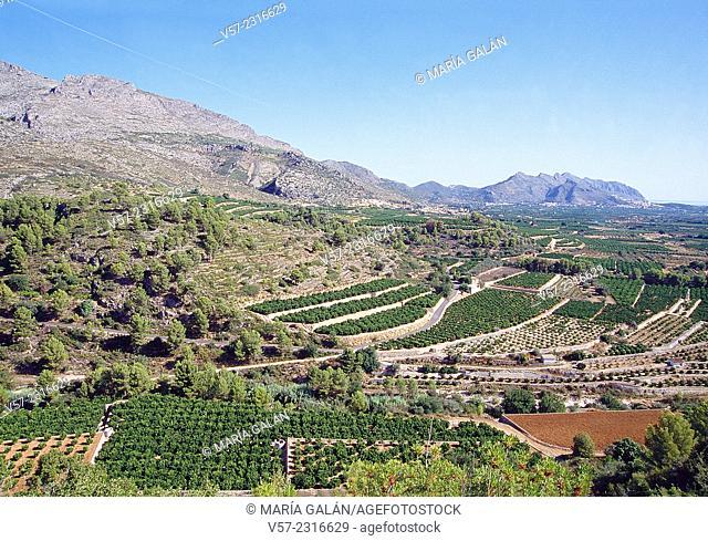 Cultivation fields. Vall de Laguar, Alicante province, Comunidad Valenciana, Spain
