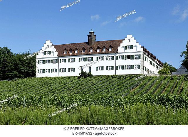 Schloss Hersberg with vineyard, Immenstaad, Lake Constance, Baden-Württemberg, Germany