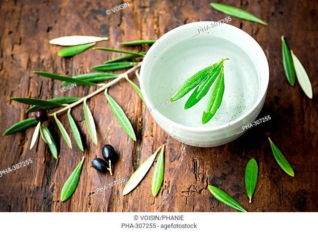 Olive leaves herbal tea