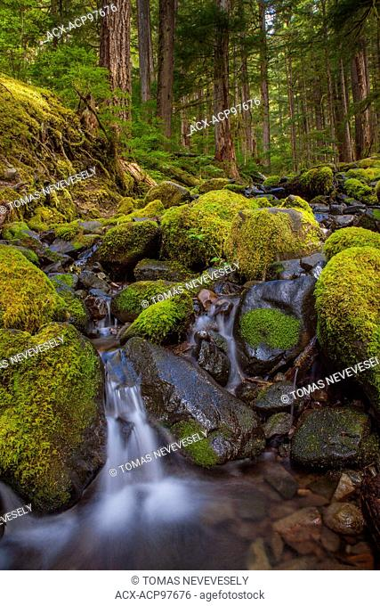 A small stream and waterfall in Olympic National Park, Washington, USA