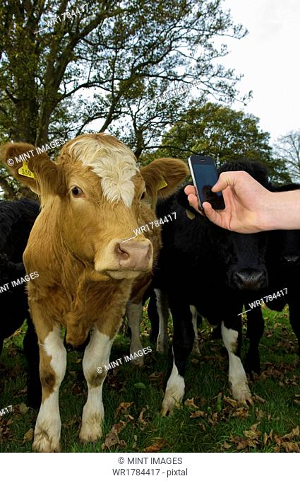 Using apps in farming, Gloucestershire, England