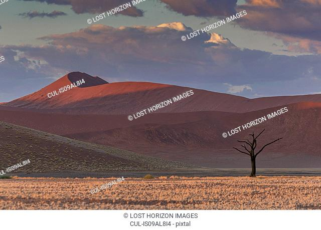 Silhouetted dead tree and giant sand dune, Sossusvlei National Park, Namibia