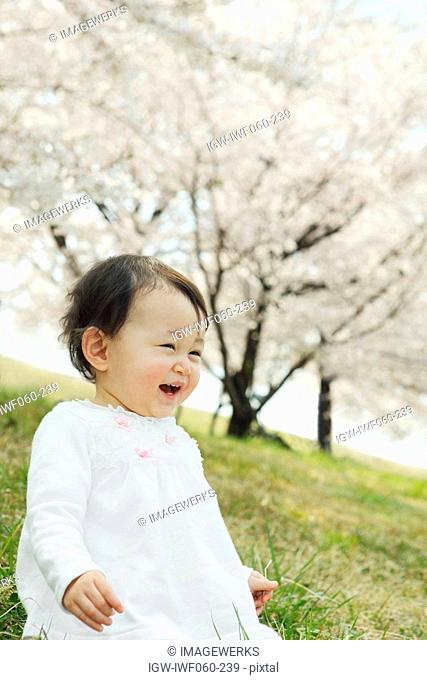 Japan, Saitama Prefecture, Baby girl sitting on bank and laughing, cherry blossom in background