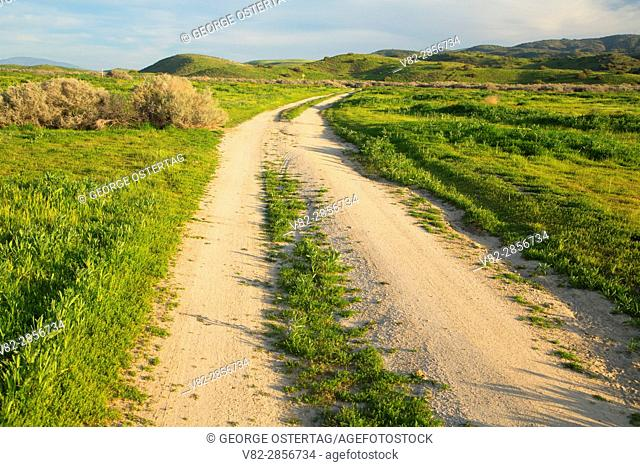Ranch road, Carrizo Plain National Monument, California