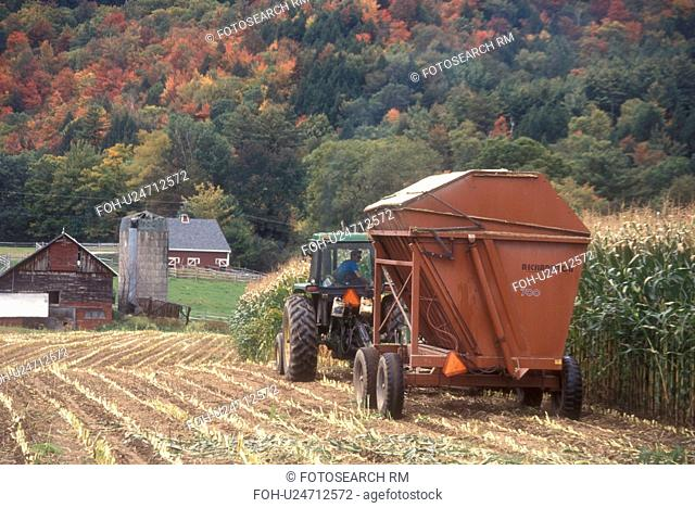 harvest, farming, fall, Middlesex, VT, Vermont, Farmer cutting his cornfield with a tractor in autumn surrounded by colorful fall foliage