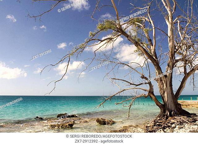 Tree in front of the beach. Fernandez Bay Village resort, Cat Island. Bahamas