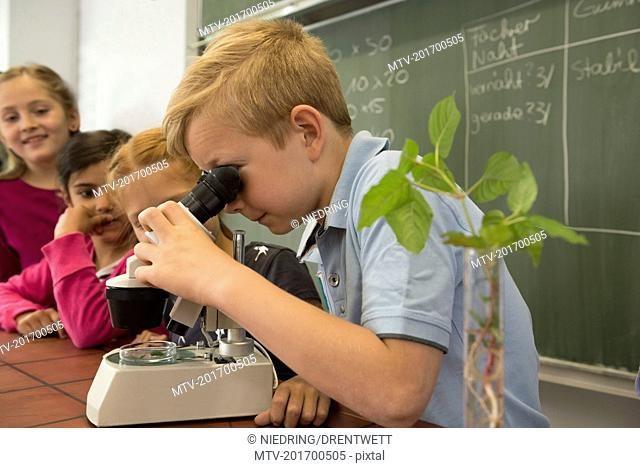 School students looking through a microscope, Fürstenfeldbruck, Bavaria, Germany