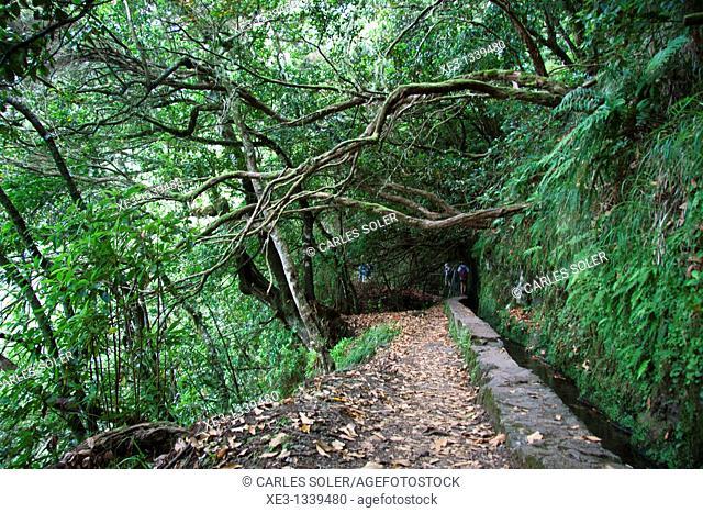 Levada do Caldeirao verde, Madeira, Portugal