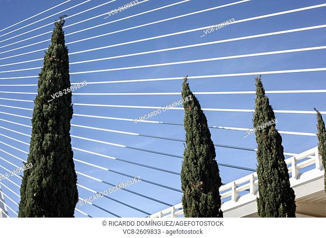 Cypress in front of Assut d'Or bridge. Valencia. Spain