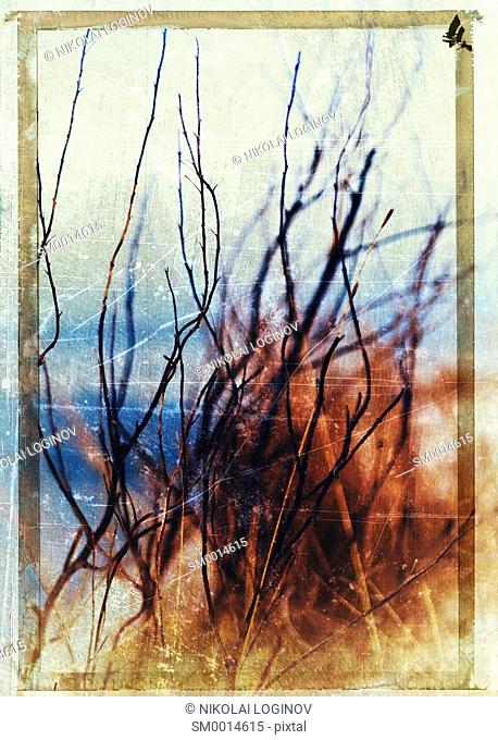 Vertical vintage postcard Norway autumn dramatic branches bokeh background backdrop