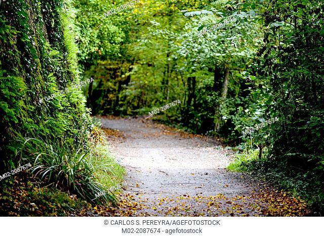 Green area around Erdre river, Nantes, Pays de la Loire, France, Europe