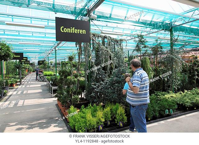 Looking at conifer in garden centre, Netherlands