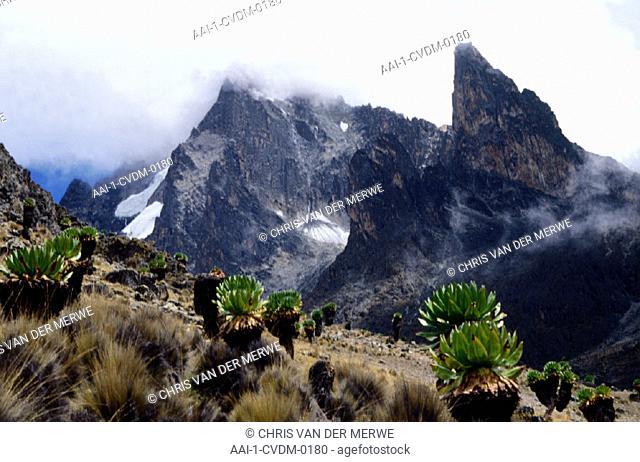 Teleki Valley, Mt Kenya, Kenya