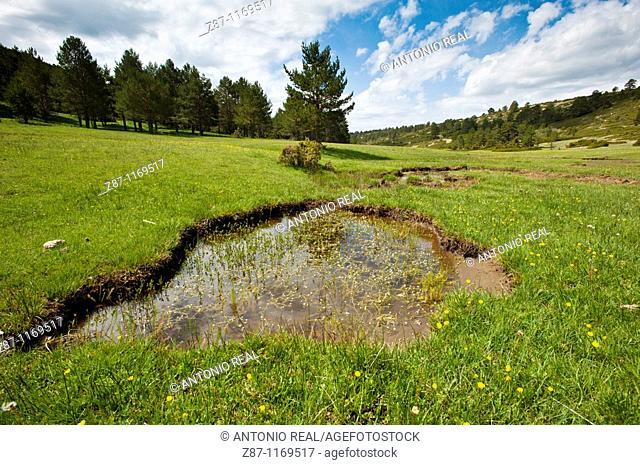 Rincón de Palacios, Arroyo Almagrero, Serrania de Cuenca Natural Park, Cuenca province, Castilla-La Mancha, Spain