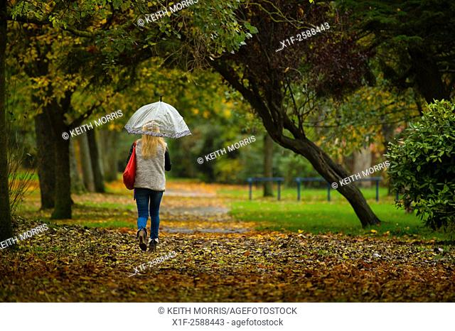 Aberystwyth Wales UK, Thursday 05 November 2015. . UK weather: a woman walks along Plascrug Avenue in the rain, under a canopy of autumn coloured trees