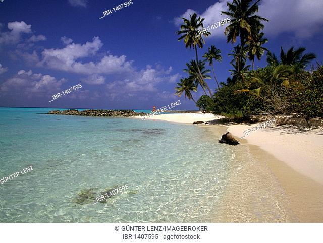 Beach, coconut palms (Cocos nucifera), Ari Atoll, Maldives, Asia
