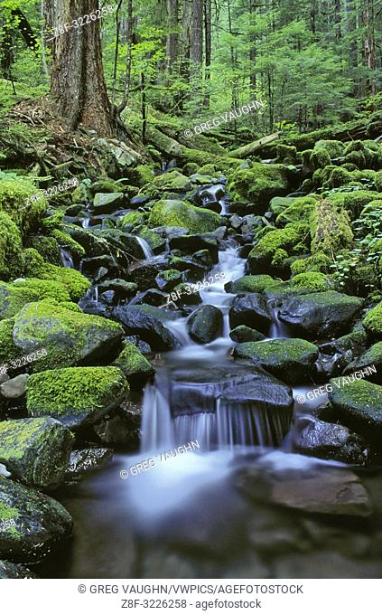 Cascading stream along Sol Duc Falls Trail; Olympic National Park, Washington.