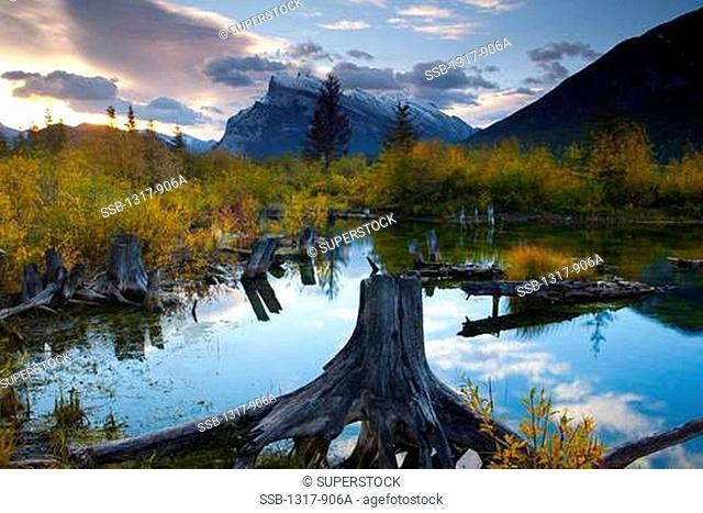 Trees around a lake at sunrise, Vermillion Lakes, Mt Rundle, Banff National Park, Alberta, Canada