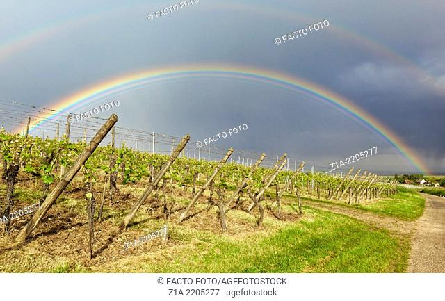 Rainbow over vineyards at Hunawihr. Alsace, France, Europe
