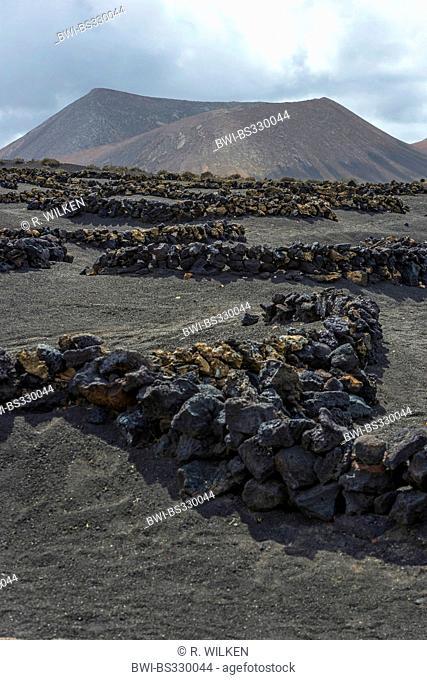 wine-growing district La Geria in volcanic landscape, Canary Islands, Lanzarote