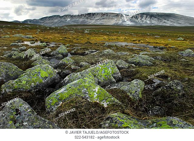Flooded zone and green mossy rocks. Berlevag. Norway