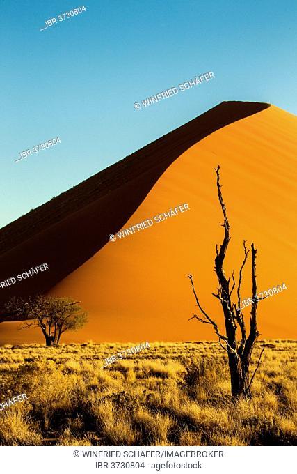 Sand dune in the evening light, Sossusvlei, Namib Desert, Namib Naukluft Park, Namibia