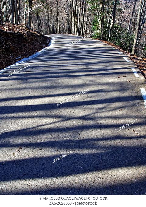 Beech trees shadows over paved road. Montseny Natural Park. Barcelona province, Catalonia, Spain