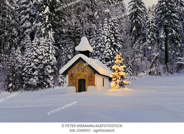 Illuminated Christmas tree in front of a chapel in winter, Bavaria, Upper Bavaria, Germany, Europe