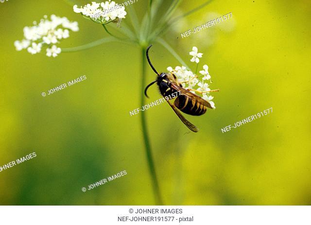 Honey bee sitting on flower