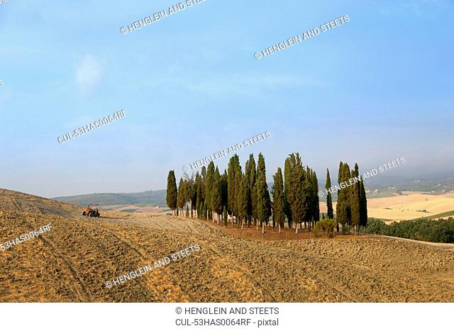 Tuscan cypress trees in dusty landscape