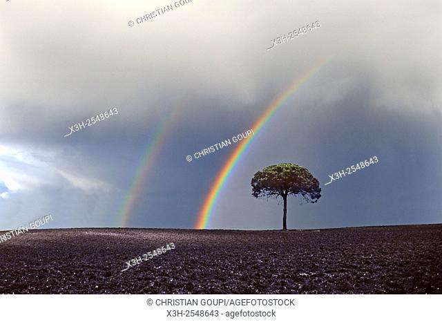 isolated tree under a stormy sky, Chad, Central Africa