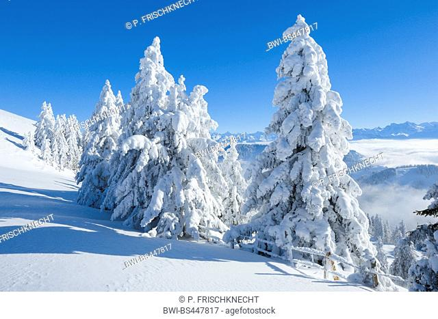 view from Rigi to the Alps in winter, Switzerland, Berner Alpen
