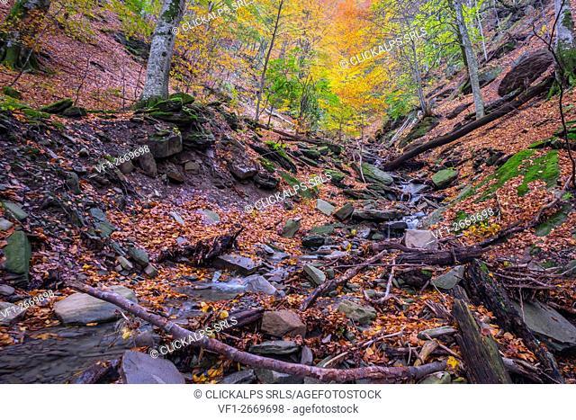 Underwood, Sasso Fratino Integral Natural Reserve, Emilia Romagna district, Italy