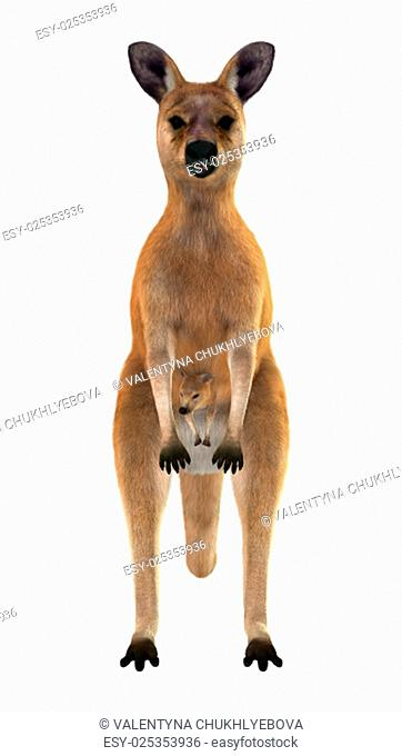 3D digital render of a red kangaroo caring a cute joey in a pouch isolated on white background