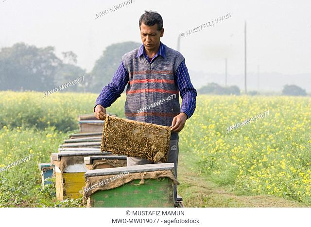 A man showing honey basket at a mobile honey collection plant, in a mustard field, in Manikganj Bangladesh January 09, 2009