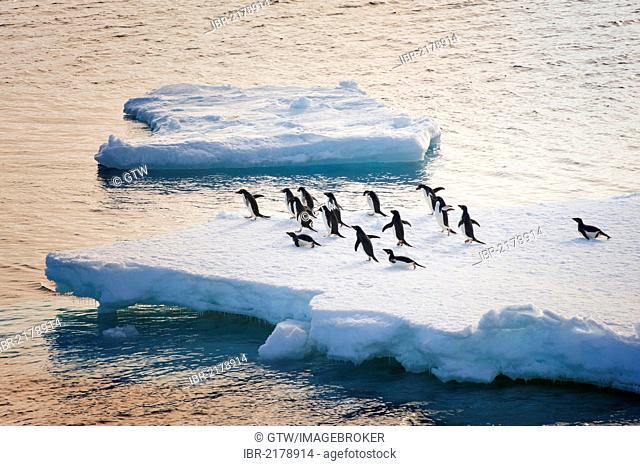 Adelie penguins (Pygoscelis adeliae) on an iceberg, Antarctic Sound, Antarctic Peninsula, Antarctica