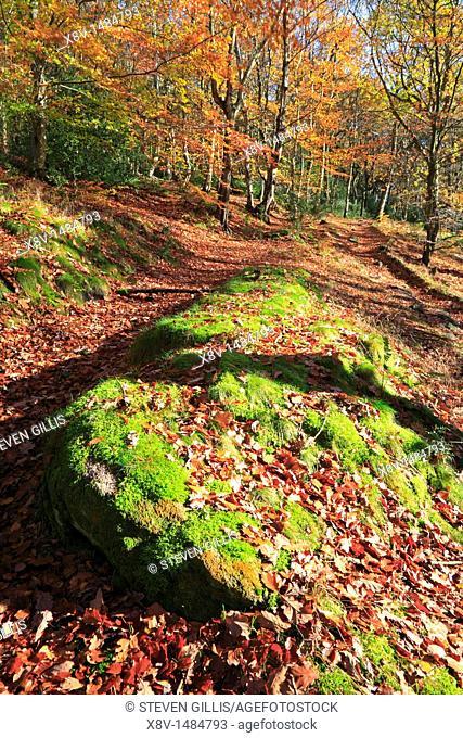 Autumn Wade Wood, Luddenden Dean, Halifax, West Yorkshire, England, UK