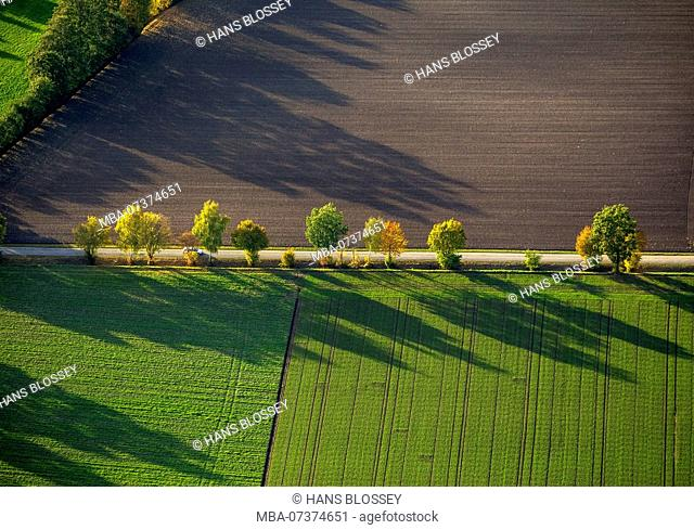 Row of trees, fields, autumn leaves, tree, trees, shadows, structures, aerial view of Werl, Soester Börde