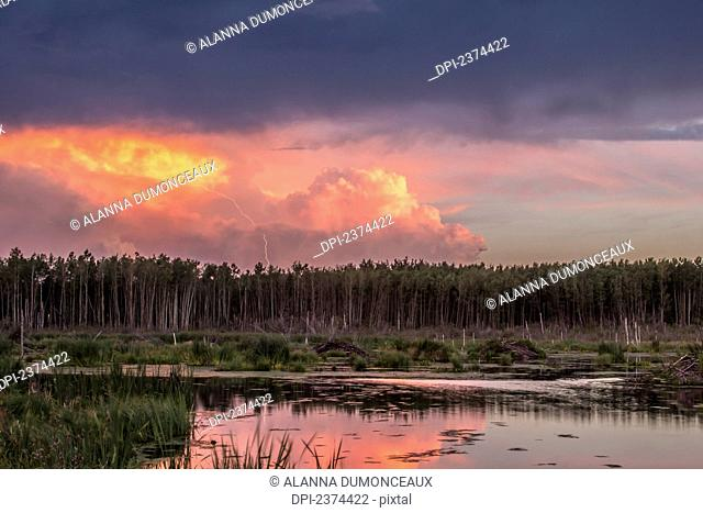 A lightning bolt strikes from the storm cloud at sunset over a beaver pond in the boreal forest; Alberta, Canada