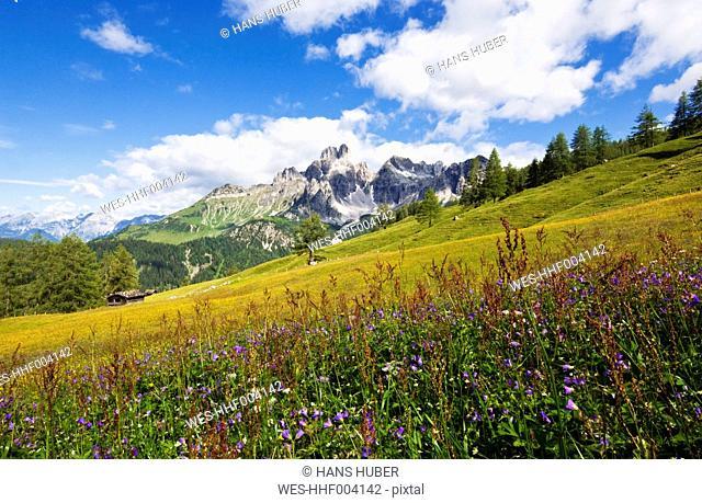 Austria, Salzburg County, View of Mount Bischofsmutze with alpine meadow during summer