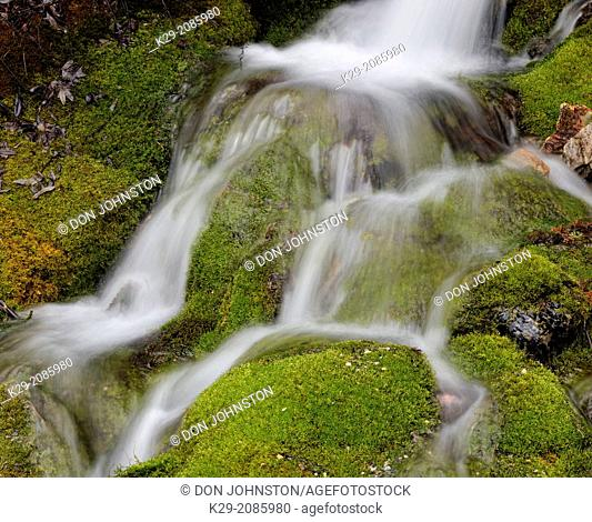 A mossy waterfall near the Spiral Tunnels, Yoho NP, BC, Canada